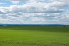 Field of seedlings. Field and sky stock photos