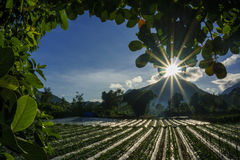 Field at sembalun village when sunrise with sun flare and blue sky Stock Images