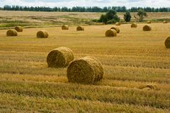 Field with sheaves of hay. Harvest. Cutted wheat. Gold field with cloudy sky Royalty Free Stock Image