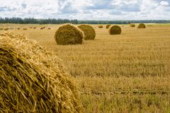 Field with sheaves of hay. Harvest. Cutted wheat. Gold field with cloudy sky Stock Photos
