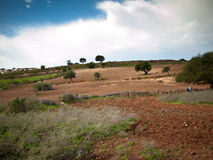 Field with shrubs and trees located on the mountain Stock Photo