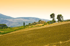 Field in sicily stock photos