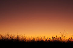 Field silhouette at sunset Stock Images