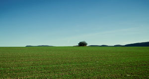 Field with a single tree. Image of a green field on a sunny afternoon and a tree in the background stock photos