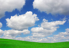 Field and Sky. Beautiful green field with blue sky Stock Image