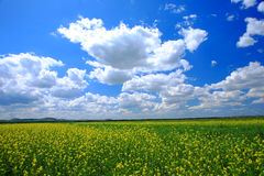 Field and sky Stock Photo