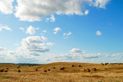 Field and the sky. Background from a landscape of field and the sky Royalty Free Stock Images