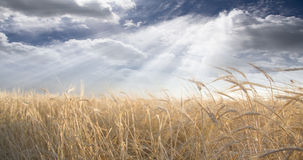 Field and Sky. With beams of light Stock Images