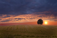 Field and sky. Royalty Free Stock Photography