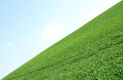 Field and sky Royalty Free Stock Image