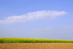 Field sky. Crops farmland countryside Stock Photos
