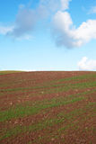 Field and sky. Royalty Free Stock Photo