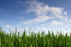 Field and sky Royalty Free Stock Photo