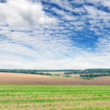 Field and  sky Stock Photography