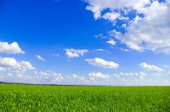 field and sky Stock Photos