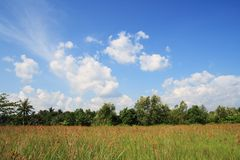 Field and sky. Green field and beautiful blue sky white clouds Stock Images