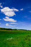 Field and sky. Beautiful field under the blue skies stock photos