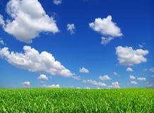 Field on sky Stock Image