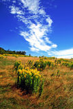 Field and Sky. Field of wild flowers against blue sky Stock Photography