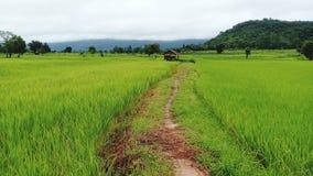 Field. Sky beautiful rice landscape stock photos