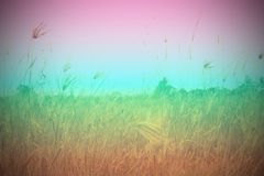 Field and sky. On color shade Stock Photography