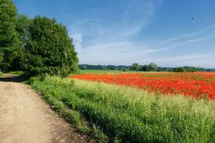 Field, Sky, Meadow, Road royalty free stock images