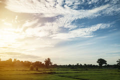Field with sky in morning sun Royalty Free Stock Image