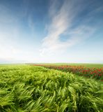 Agricultural landscape as a background Royalty Free Stock Photography
