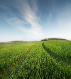 Agricultural landscape as a background. Field and sky in the summer time. Agricultural landscape as a background Royalty Free Stock Image