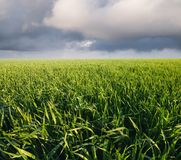 Agricultural landscape as a background. Field and sky in the summer time. Agricultural landscape as a background Royalty Free Stock Images