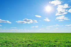 Field, sky and sun. Field of lush green grass under a clear sky Royalty Free Stock Image