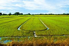 Field and sky in Thailand Royalty Free Stock Image