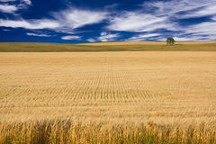 Field and Sky. With tree in distance Royalty Free Stock Image