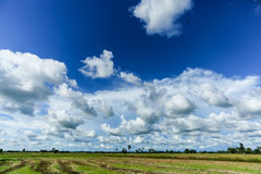 Field sky and trees Stock Images