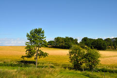 Field and sky. With trees in fore ground and back ground, summer time in Sweden royalty free stock image