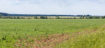 Field and sky Royalty Free Stock Photography