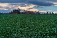 Field, Sky, Wildflower, Meadow royalty free stock photo