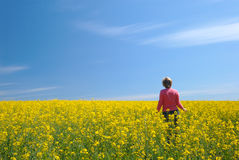 Field, sky and the woman Royalty Free Stock Photo