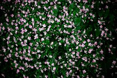 Field with small flowers royalty free stock image