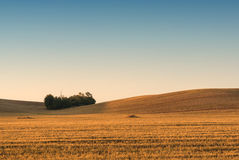 Field. Small forest in autumn field Royalty Free Stock Image