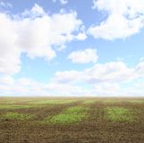 Field with small seedlings Royalty Free Stock Image