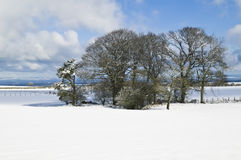 Field of snow, horizontal. Stock Image