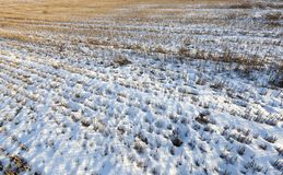 Field in the snow Royalty Free Stock Image
