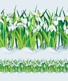 Field of Snowdrops. Seamless. Vector Royalty Free Stock Photography