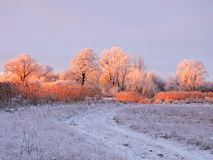 Field and snowy trees in evening, Lithuania royalty free stock photography