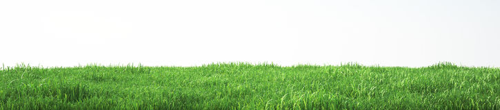 Field of soft grass, perspective view with close-up. 3d illustration Stock Photos