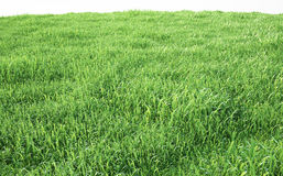 Field of soft grass, perspective view with close-up. 3d illustration Stock Photo