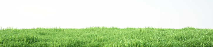 Field of soft grass, perspective view with close-up. 3d illustration Stock Images
