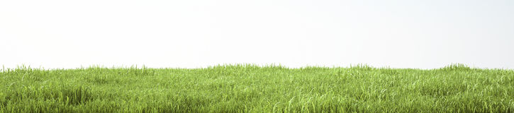 Field of soft grass, perspective view with close-up. 3d illustration Royalty Free Stock Images