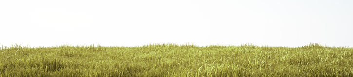 Field of soft grass, perspective view with close-up Stock Photography
